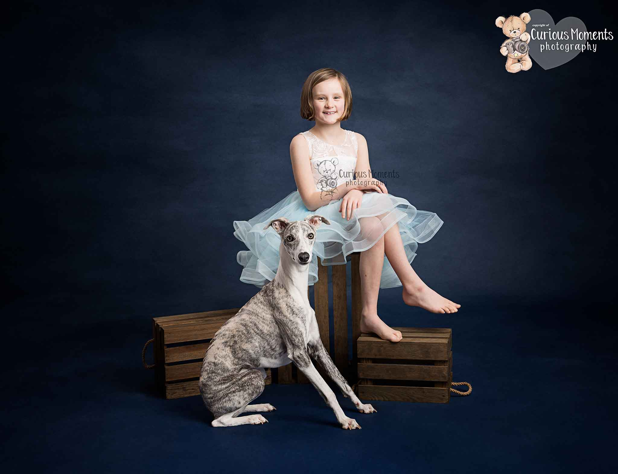 Young girl wearing a white and blue lace ruffled dress dress sitting on a wooden crate on a blue background with the family whippet sat next to her during photo shoot with Carmarthen family photographer