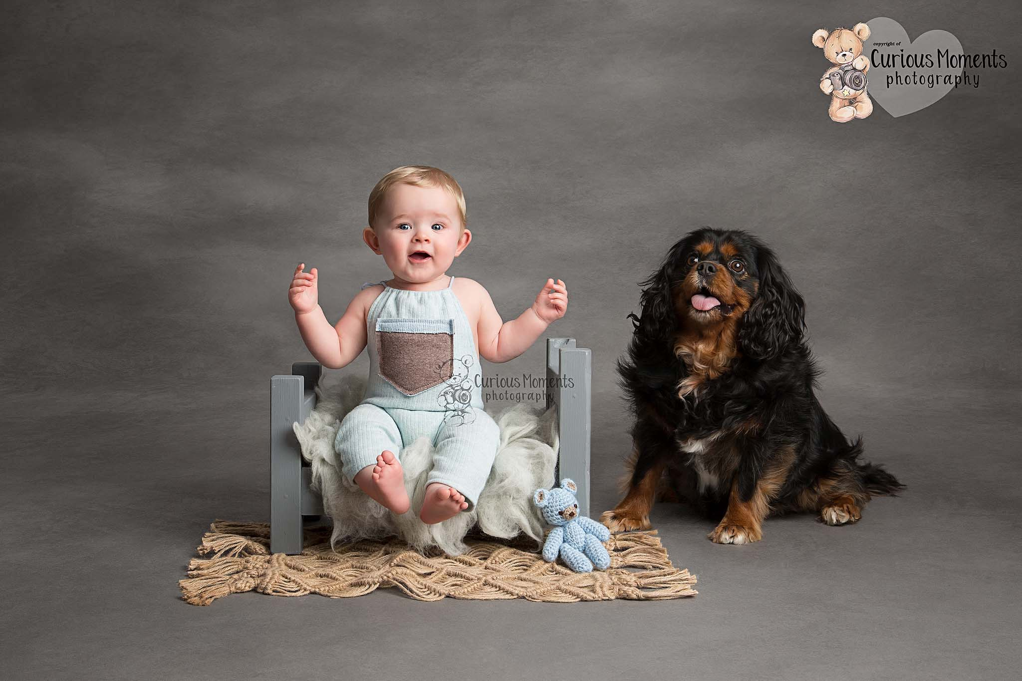 Baby boy sitting on a small bed wearing a blue romper on a grey background with the family dog sat next to him during sitter session with carmarthen photographer
