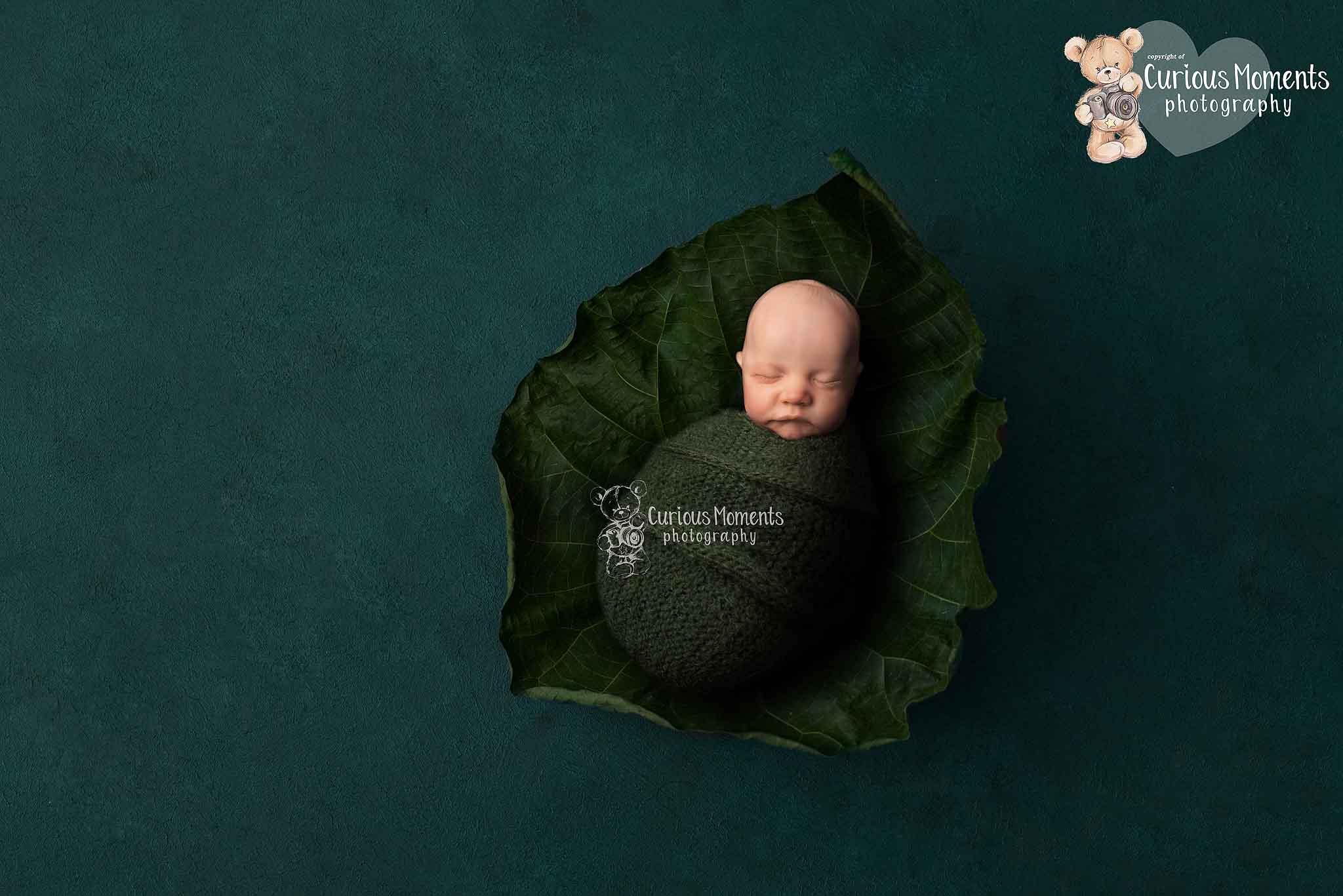 Newborn baby boy nestled into a fallen leaf